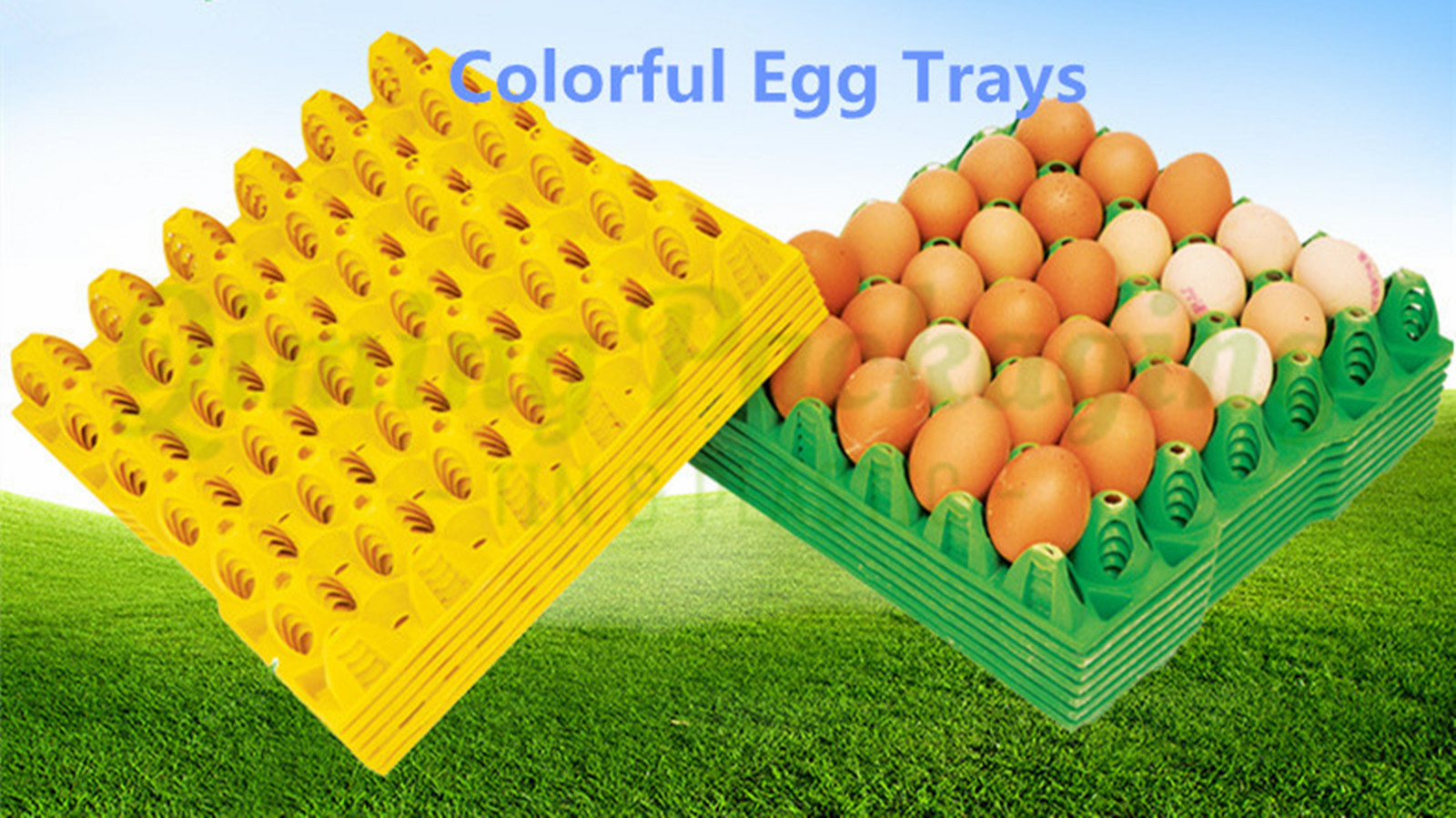 colorful egg trays