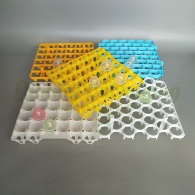 plastic EGG TRAY (2)
