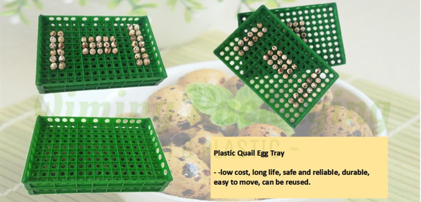 quail egg trays