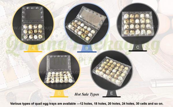 quail egg trays2